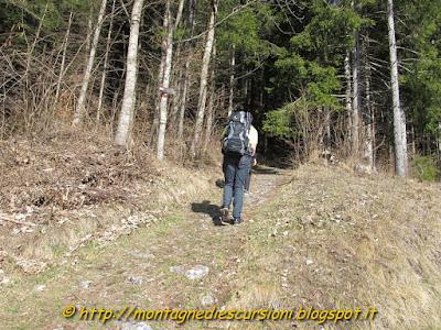rifugio scarpa dolomiti agordine il sentiero entra nel bosco
