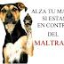 """ARGUMENTO: """"Se maltrata a un animal si no es tratado de acuerdo al fin para el que fue creado"""""""