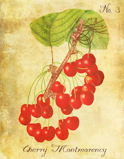 botanical fruit cherry illustration artwork print art image
