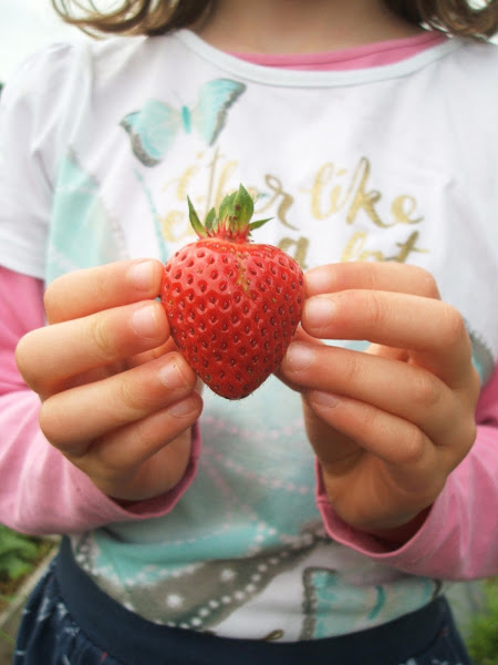 child holds a rip allotment strawberry