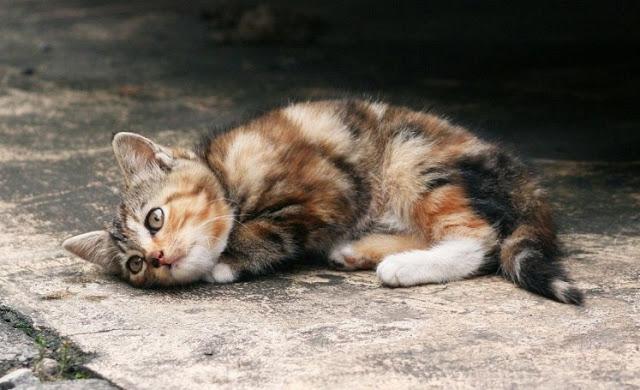 Quanto vive un gatto randagio