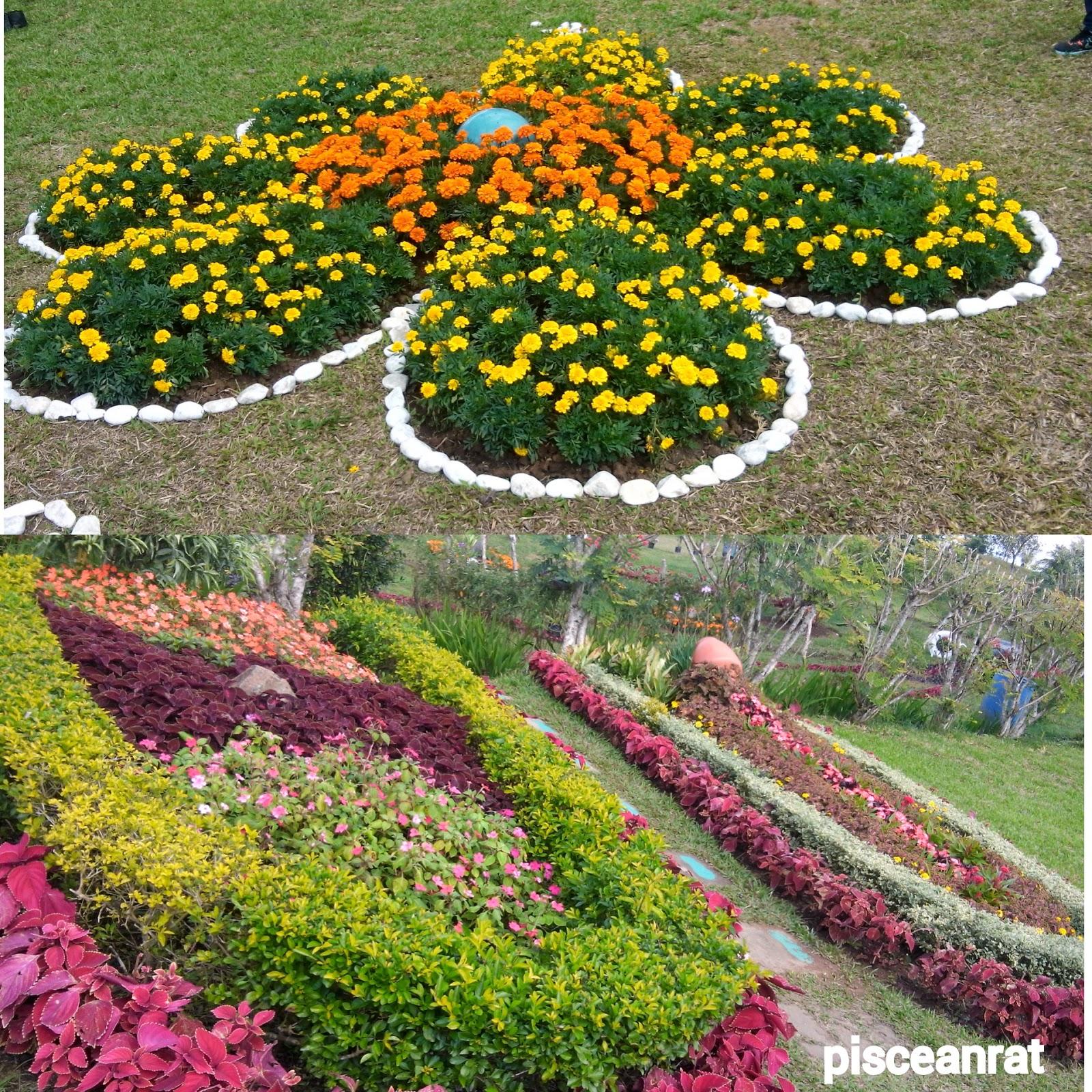 flower garden, paradizoo,