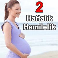 2 Haftalık Hamilelik (Gebelik)