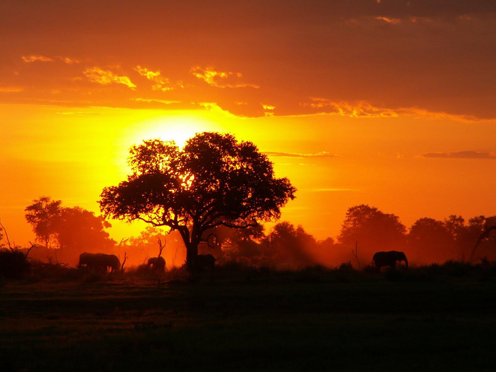 Magie africane il continente nero presenta una grande for Paesaggi naturali hd