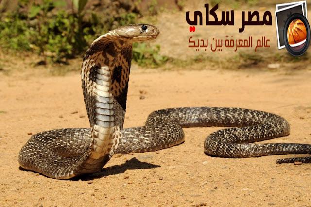 مكانة الثعابين فى العالم ومااأهم ما يميزها Snakes