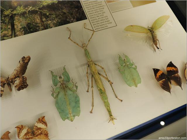 Camuflaje de los Insectos en el Insectarium de Montreal
