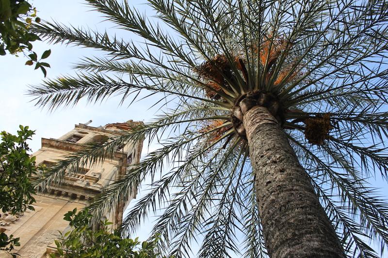 Kathedrale in Spanien mit Palme