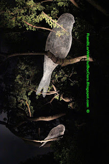Bird sculptures, Singapore Night festival, Singapore National Museum, Singapore