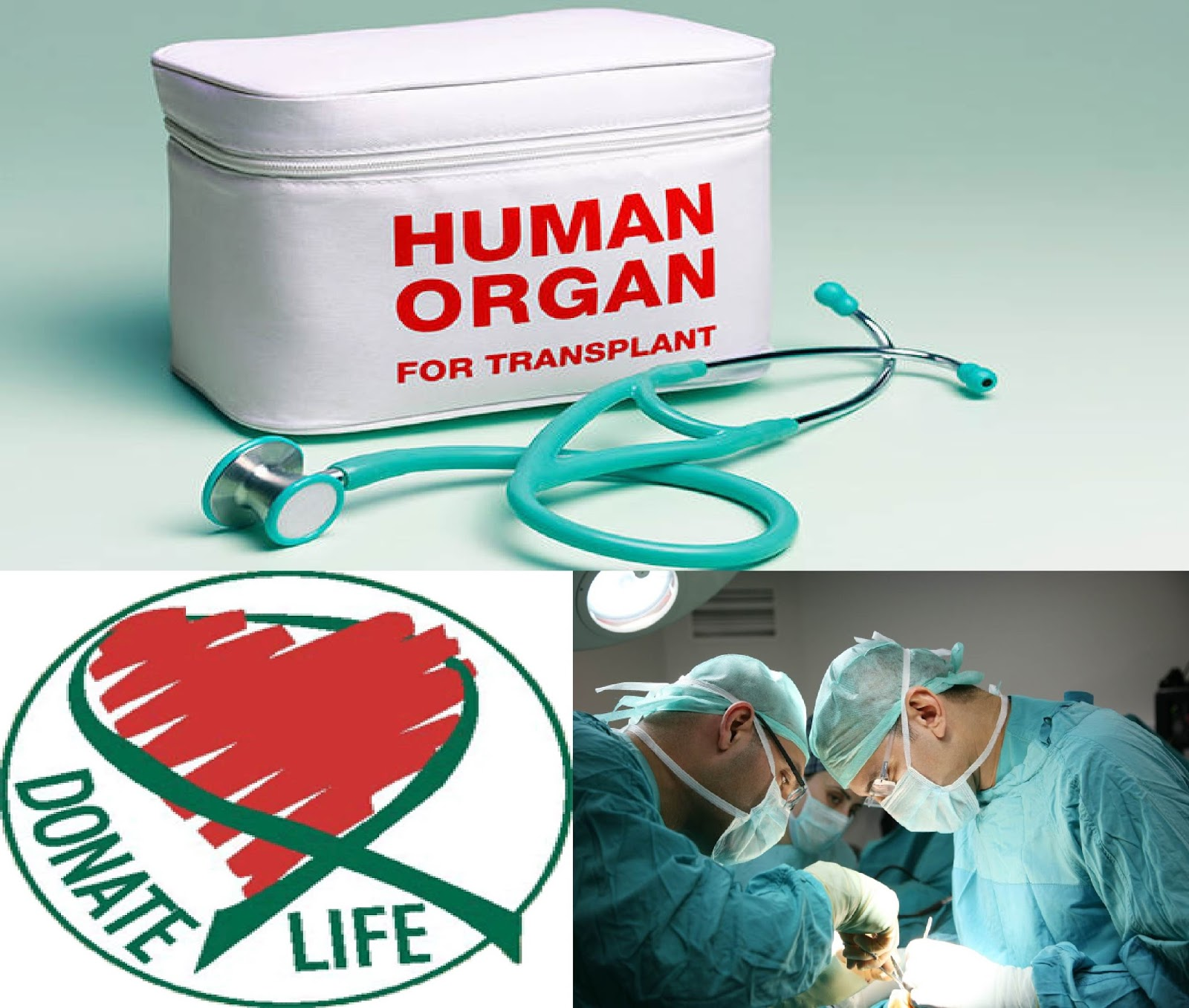 Medical Travel guide: Organ Transplant Packages in India, Thailand