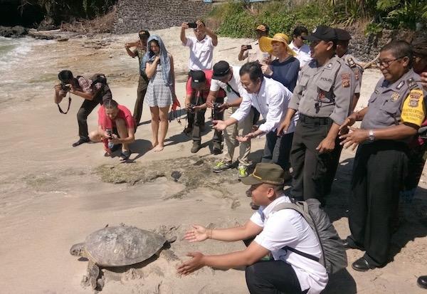 Pelepasliaran Penyu Hujau DI Pantai Blue Lagoon Padangbai Bali