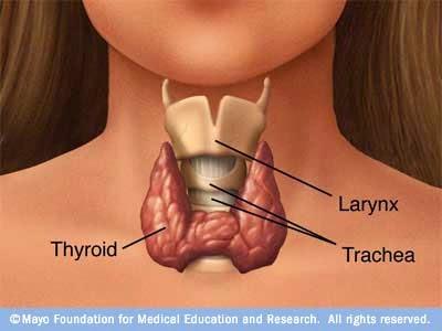 Obat Alami Tiroid