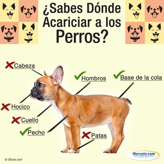 Palpitaciones en la cabeza de un perro