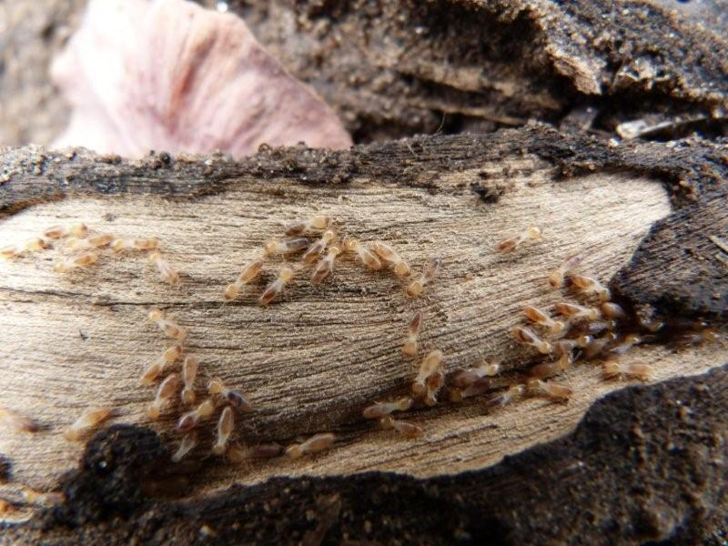 Safari Ecology: The role of termites in the savanna biome