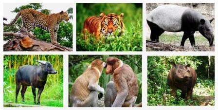 Daftar Nama Taman Nasional Di Indonesia