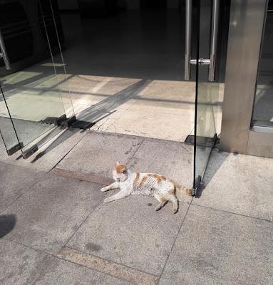 ビルの出入り口で日向ぼっこする野良猫