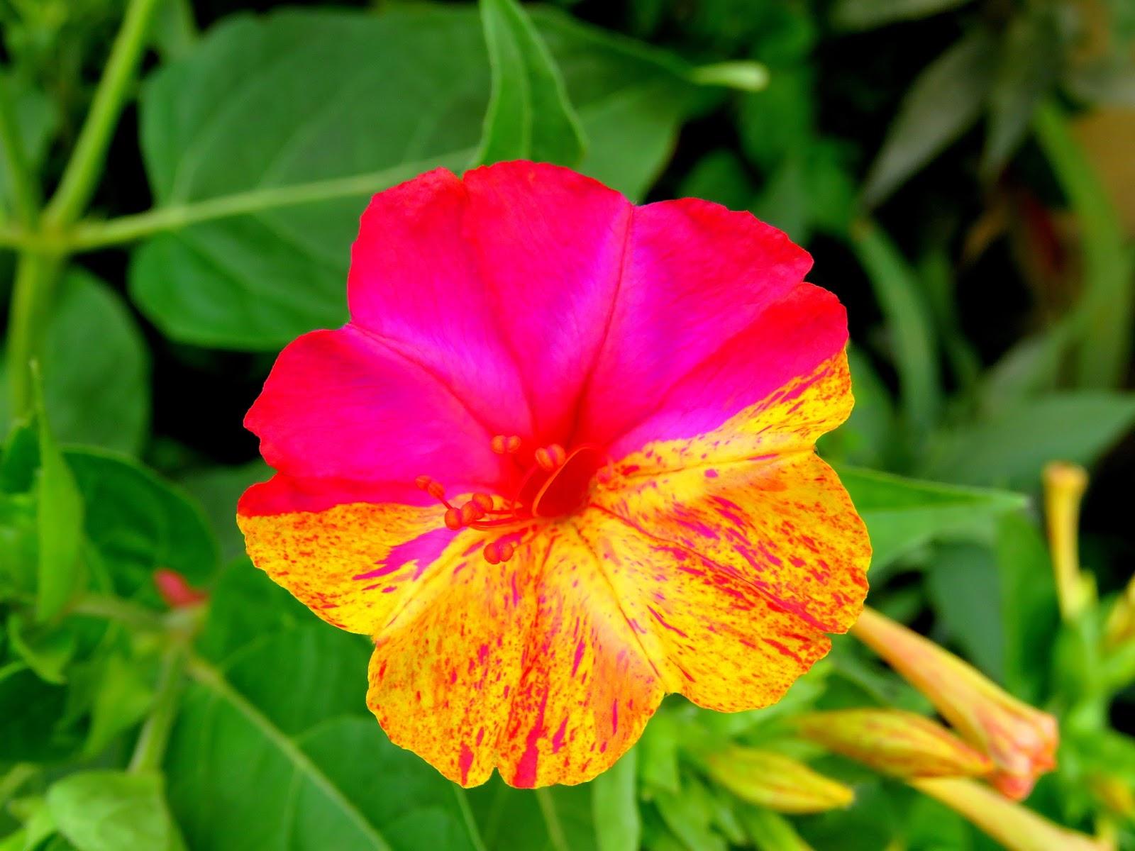 Ventanas Al Pensamiento La Flor Más Bella Del Mundo