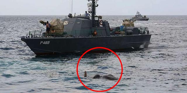 Seekor Gajah Ditemukan Berenang Dilaut