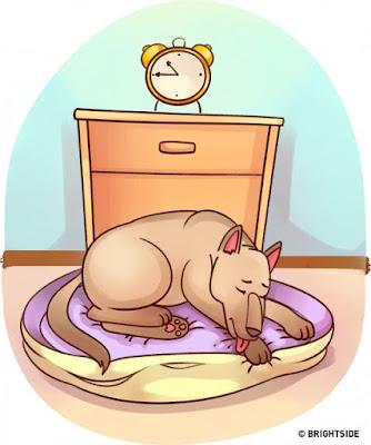 Liếm láp cơ thể là thói quen bình thường của chó mèo nhưng nếu chúng chỉ đặc biệt liếm ở một điểm nhất định