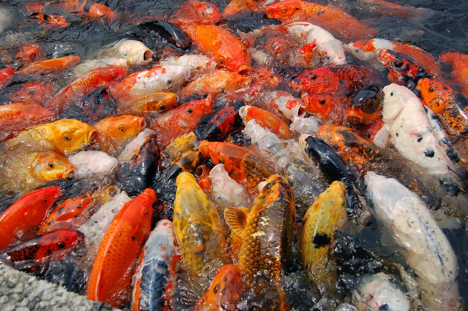 ikan paling banyak di gemari di indonesia