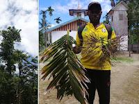 Pohon Pinang Jenis Baru Diberi Nama Ilmiah Areca jokowi