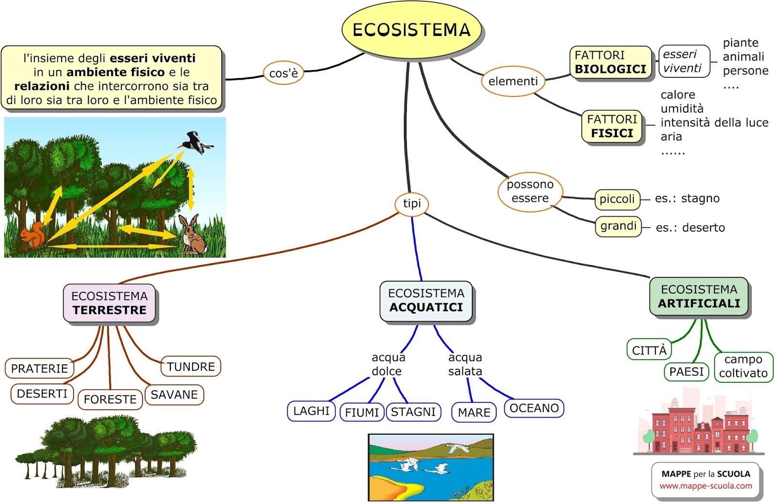 mappe per la scuola l 39 ecosistema la comunita 39 biologica