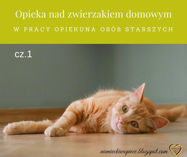 Opieka nad zwierzakiem domowym w pracy opiekuna osób starszych - cz. 1 SŁÓWKA