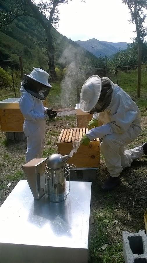 dulce oficio apicultura de osos y colmenas