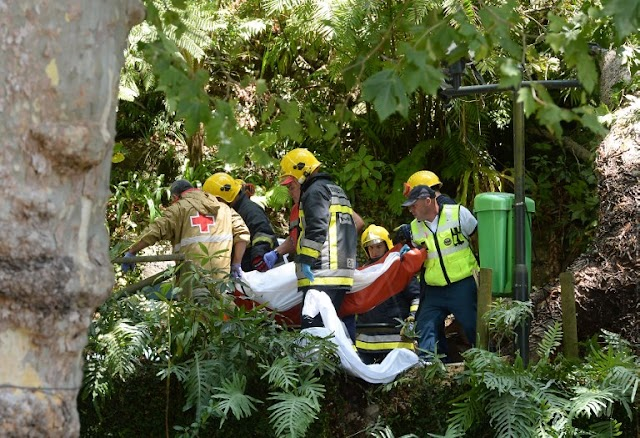 #Disaster : Falling tree kills 13 at Catholic festival in Portugal