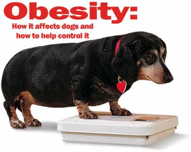 Your dog is overweight?