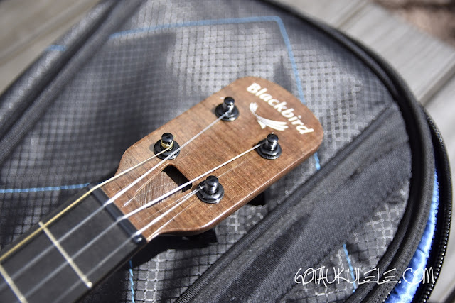 Blackbird Farallon Tenor Ukulele headstock