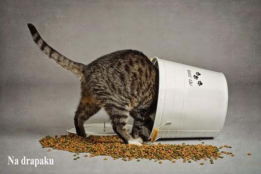 Dlaczego kot za dużo je?