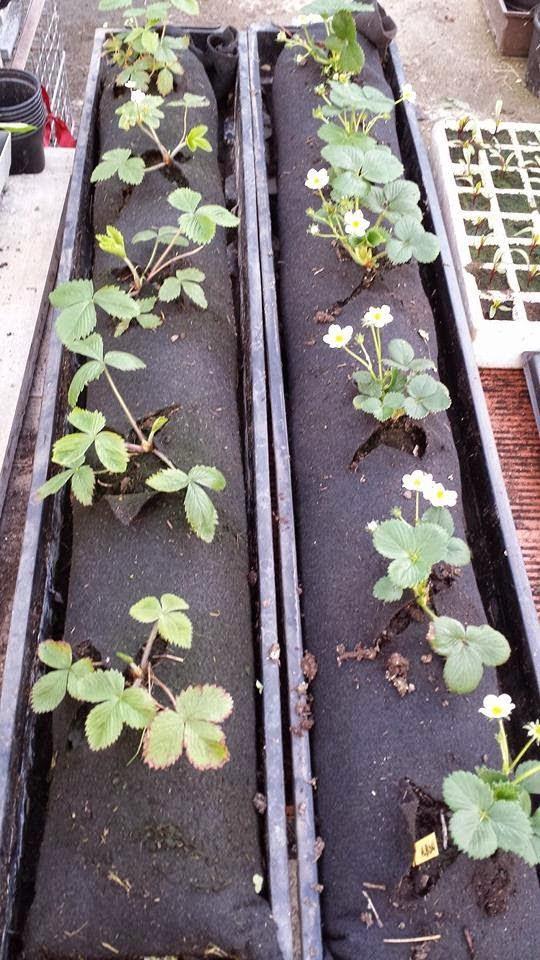 jardineras feltpot