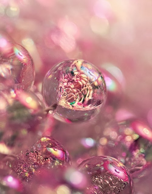 http://pleasureblood.tumblr.com/post/18658554598/lornadune-via-500px-photo-raspberry-bubbly