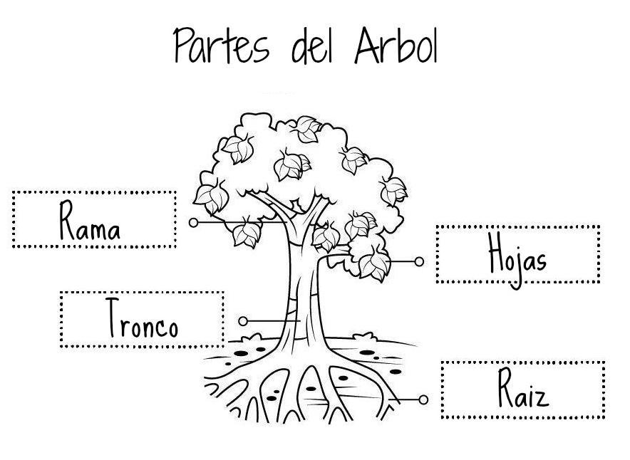 Dibujo De Planta Para Colorear