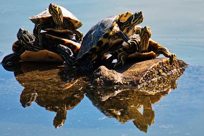 SEO -- The Tortoise