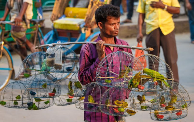 A Street Hawker In Bangladesh