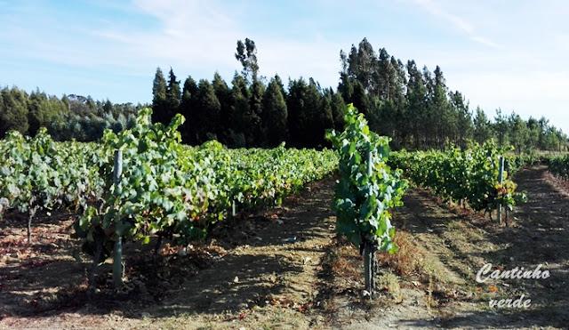Poda e curiosidades sobre a vinha
