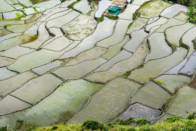 Rizières Buscalan - Kalinga - Philippines