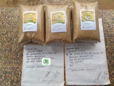 Benih pesanan USWANTORO Bojonegoro, Jatim.   (Sebelum Packing)