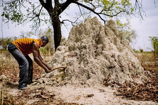 A Woman Was Digging A Hole In My Father's House - DreamsWithJoshua