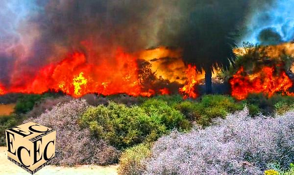 Conato incendio dunas Maspalomas,  controlado