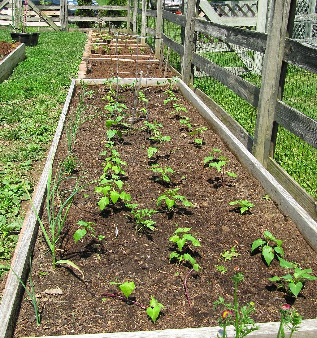 Growing Zucchini On A Trellis: Shawn Ann's Home And Garden: Spring Garden 2014 All Planted