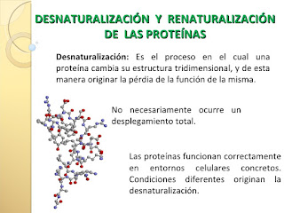 http://es.slideshare.net/macr091/i-02-proteinas-desnaturalizacion-proteinas-del-plasma