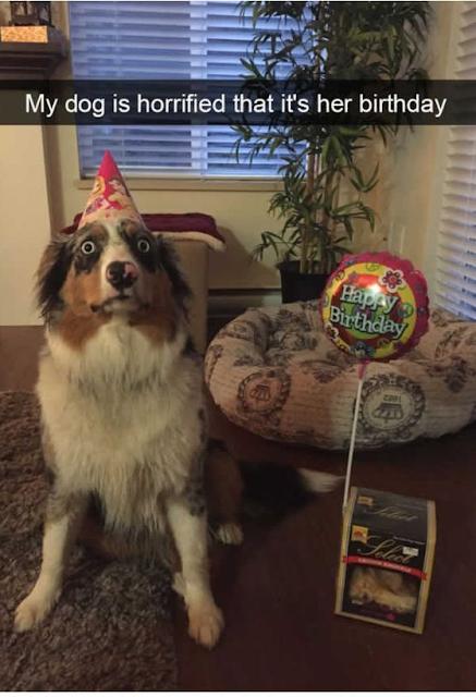 Cute Dog Memes Viral Online 6