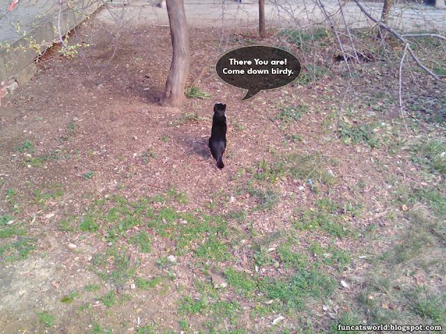 Cat Call bird