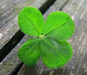 Lucky Irish Four Leaf Clover