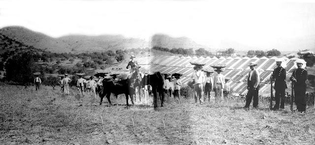 Plaga de la filoxera en Málaga en 1877.