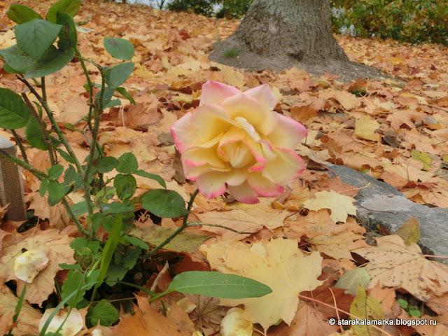 осень в венгрии, природа венгрии, осень в Будапеште