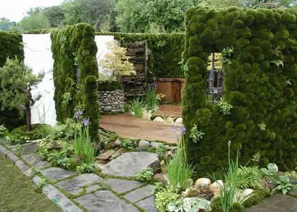 мшанник в саду