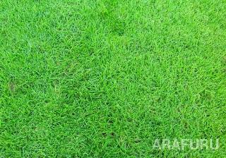 jenis-jenis-rumput-golf.jpg